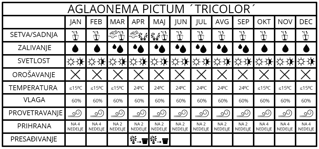 Agalonema pictum Tricolor