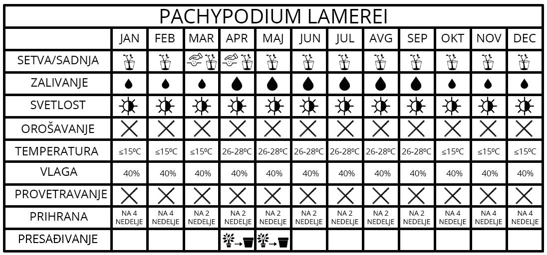 pachipodium lamerei