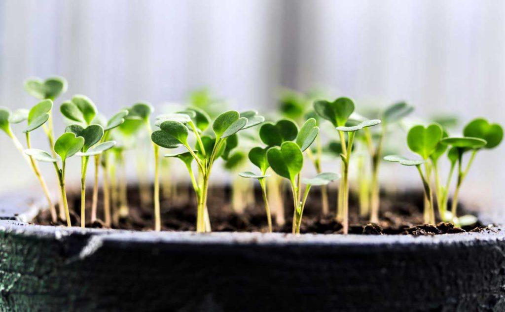 Dendrolog Savet sadnja semena