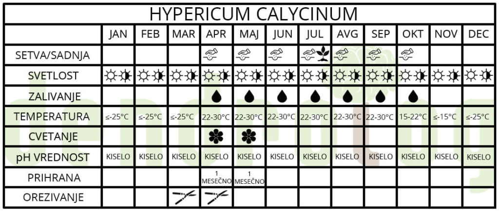 Hypericum calycinum tabela