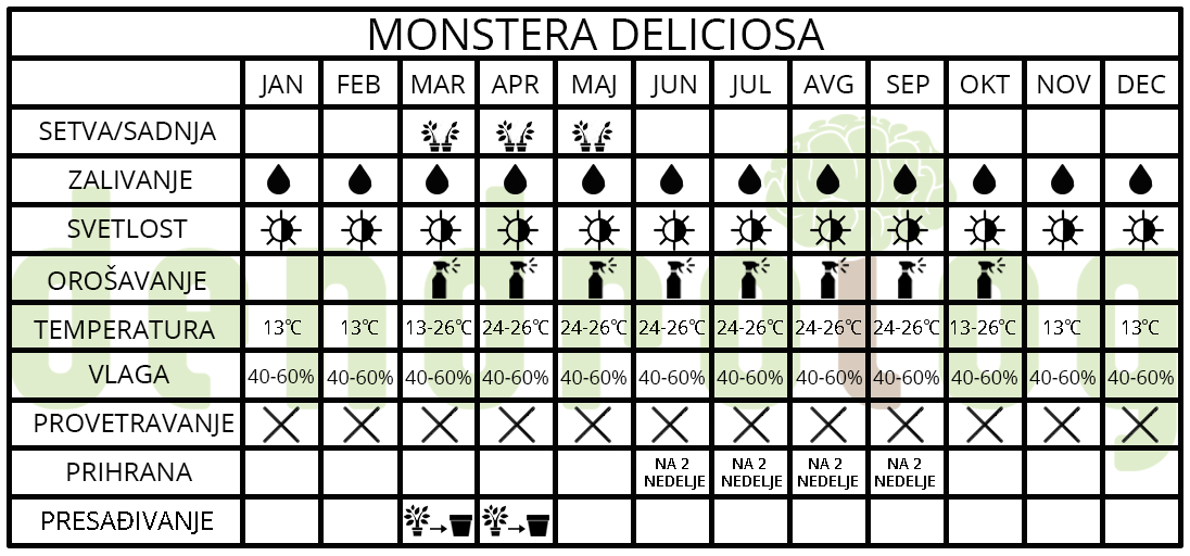 monstera deliciosa tabela